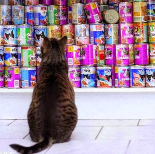 как выбрать кошачий корм -классы корма для кошек