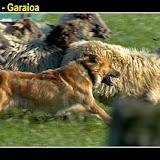 BarriatxiBarria8.jpg