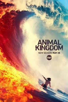 Baixar Série Animal Kingdom 4ª Temporada Torrent Grátis