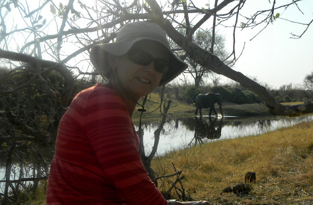 elephant crosses the river downstream from our camp