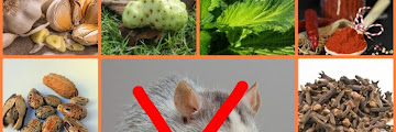 Natural Rat Repellent Ingredients Without Chemicals, Safe For Humans