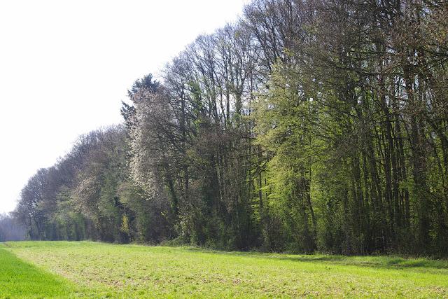 Les Hautes-Lisières (Rouvres, 28), 12 avril 2015. Photo : J.-M. Gayman