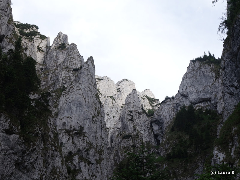 2015.06.14 - P. Craiului - Creasta Frumoasa din Padina Inchisa
