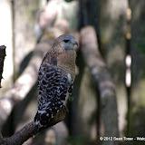 04-07-12 Homosassa Springs State Park - IMGP4578.JPG