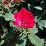 Gardening 2011 - 100_9170.JPG