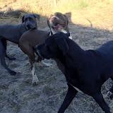 Celeste & Kiya on 11/3/2012