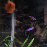 Fish - IMG_20121015_192536.jpg