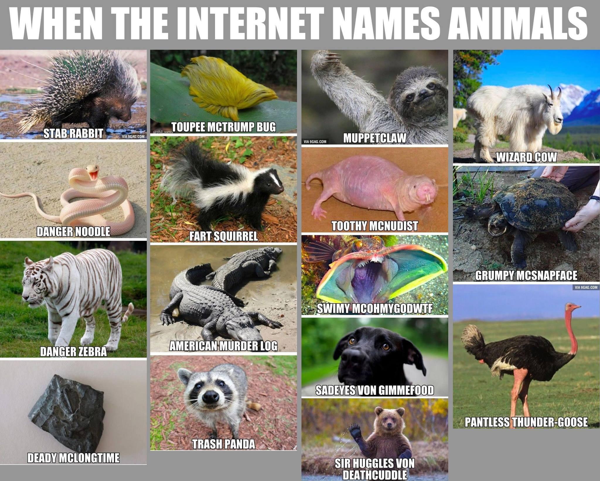 when the internet names animals democratic underground