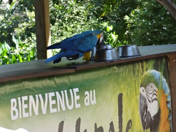 2017.06.17-029 spectacle de perroquets