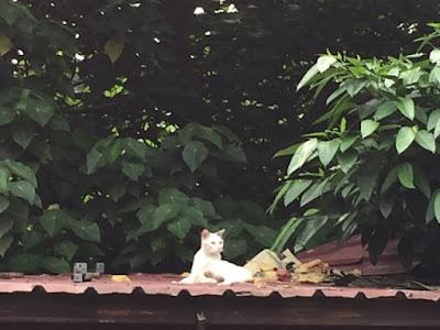 屋根の猫3