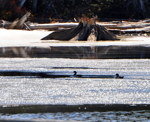 13. wood ducks-kab