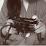 Shahtaj Maqsood's profile photo