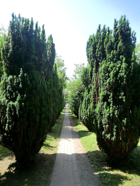 CIMG7482 Yew avenue, Shoreham churchyard