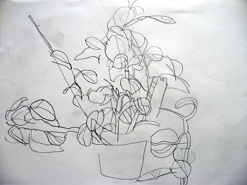 Contour Line Drawing Plant : Right brain draw session contour line blind