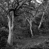 11. Bombala Bush. NSW