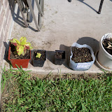 Gardening 2010, Part Two - 101_3421.JPG