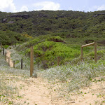 Tallow Beach to campsite track
