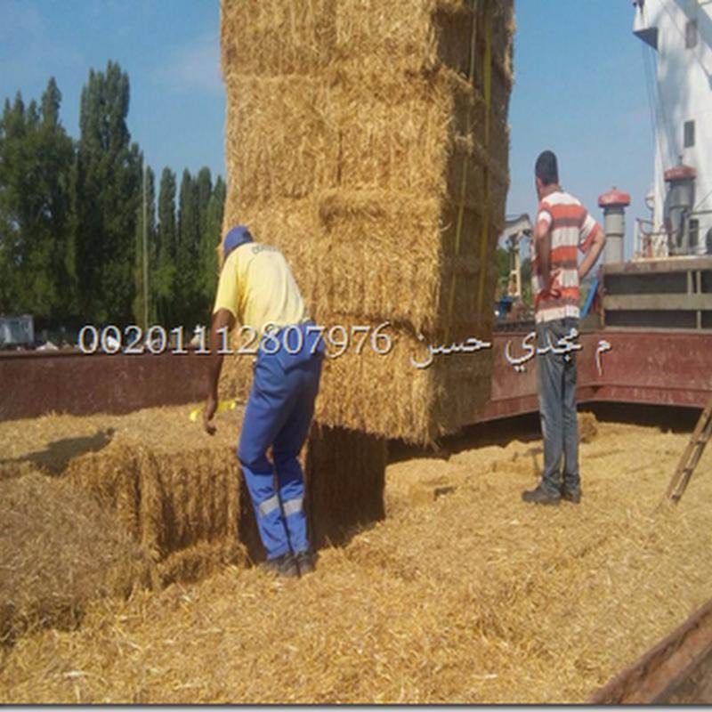 قش القمح باسعار ممتازة للكميات |منشا بلغاري .wheat_straw_offer_sale