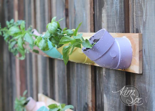 Planting in PVC pipe