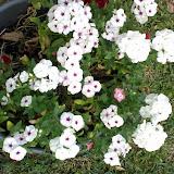 Gardening 2014 - 0404190735.jpg