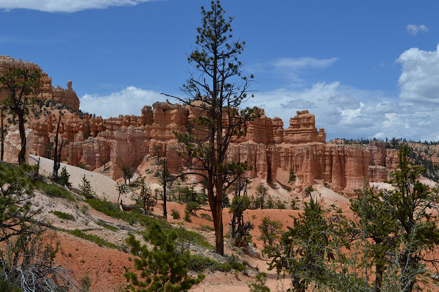 a tall tree with the hoodoos
