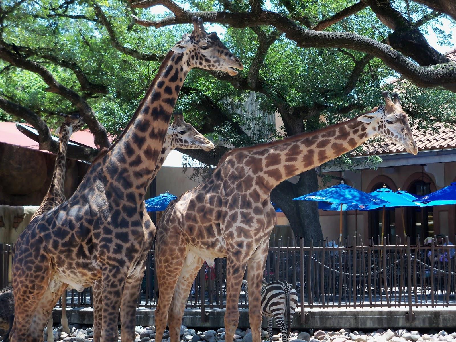 Houston Zoo - 116_8552.JPG