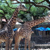 Houston Zoo - 116_8552.JPG