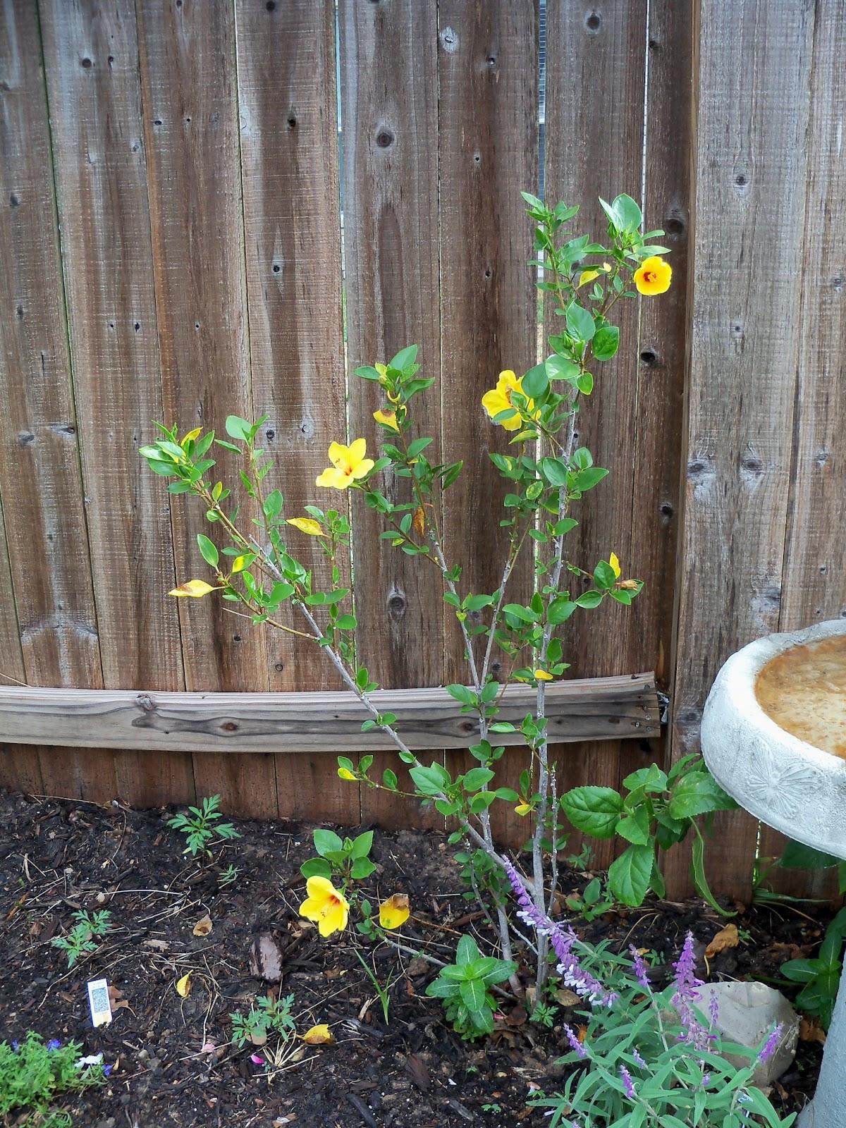 Gardening 2011 - 115_0404.JPG