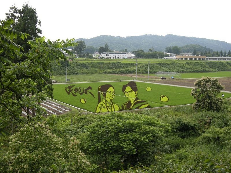 japanese-rice-paddy-art-4
