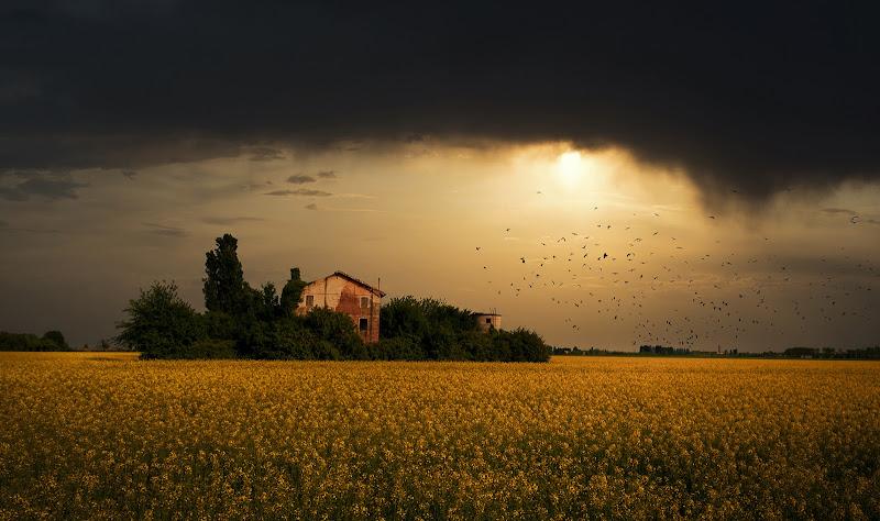 un mare giallo colza di Giovi18