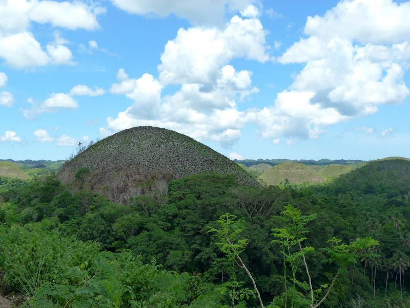 Chocolate hills