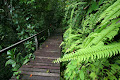 Ferns beside the plankwalk to Clearwater | photo © Matt Kirby