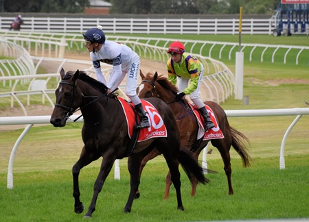 oakleigh plate_she will reign 11
