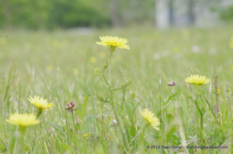 2013 Spring Flora & Fauna - IMGP6380.JPG