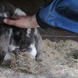 Welpen - Kinderboerderij & Crossbaan - IMG_2474.JPG