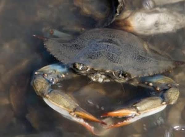 Corpus Christi Crab Boil Recipe