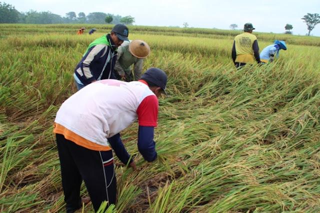 Anomali cuaca, Petani di Ngawi terancam merugi