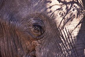 Elephant Eye, South Africa
