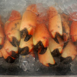tasty Stone Crab claws in Miami, Florida, United States