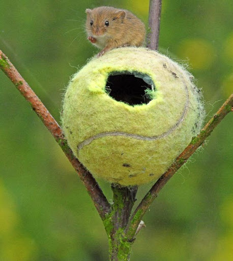 tennis-ball-mouse-home-4