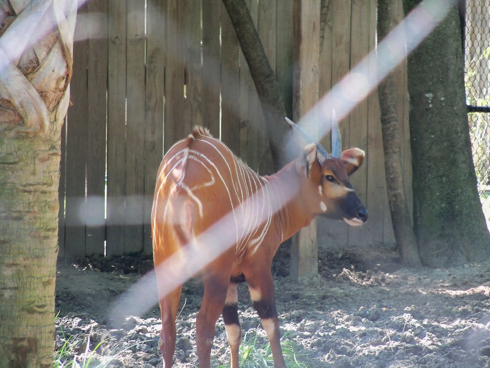 Houston Zoo - 116_8432.JPG