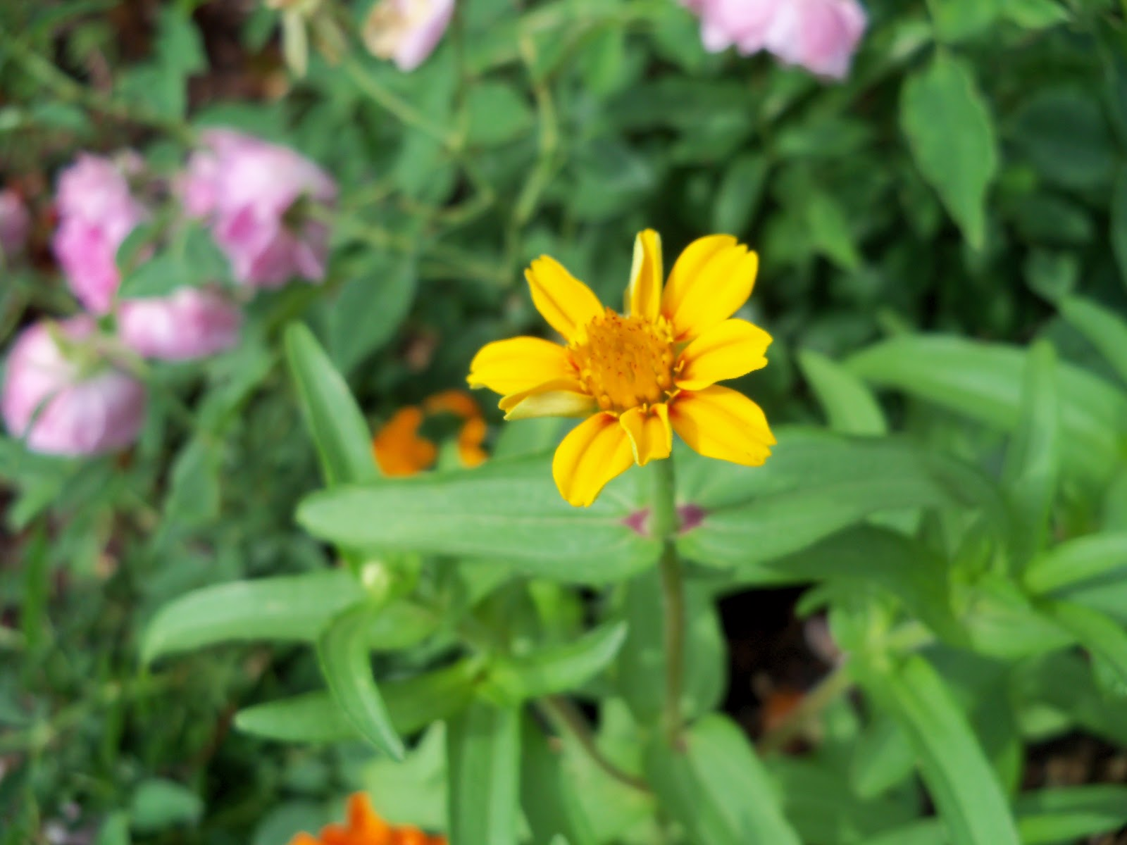 Gardening 2010, Part Two - 101_2184.JPG