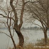 01-26-13 White Rock Lake - IMGP4339.JPG