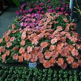 cultivo de plantas florales anuales - 5-8-05%2B148.jpg