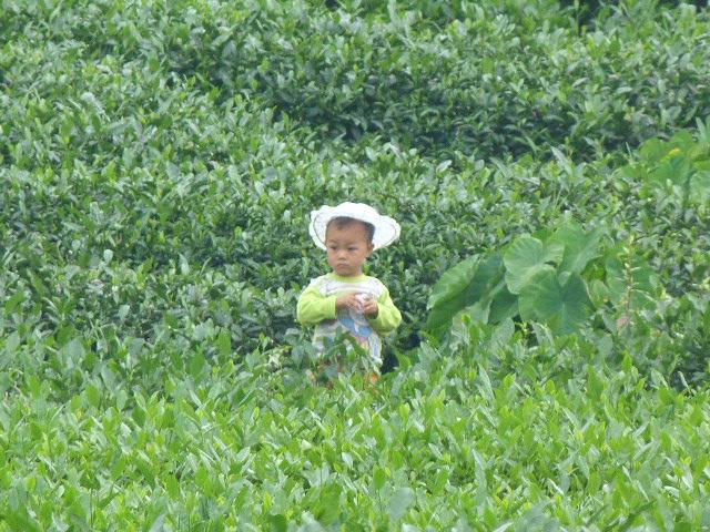 CHINE.SICHUAN.PING LE à 2 heures de Chengdu. Ravissant .Vallée des bambous - P1070594.JPG