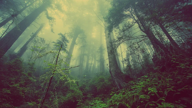 Natureza Pixabay