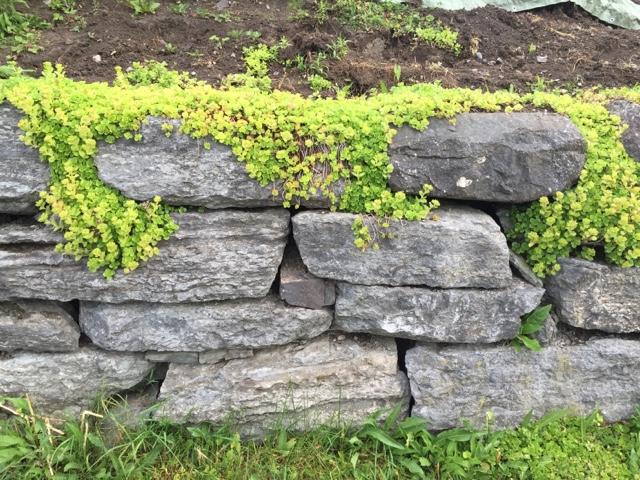 Hjemmebloggen min: inspirasjon til bed i hagen