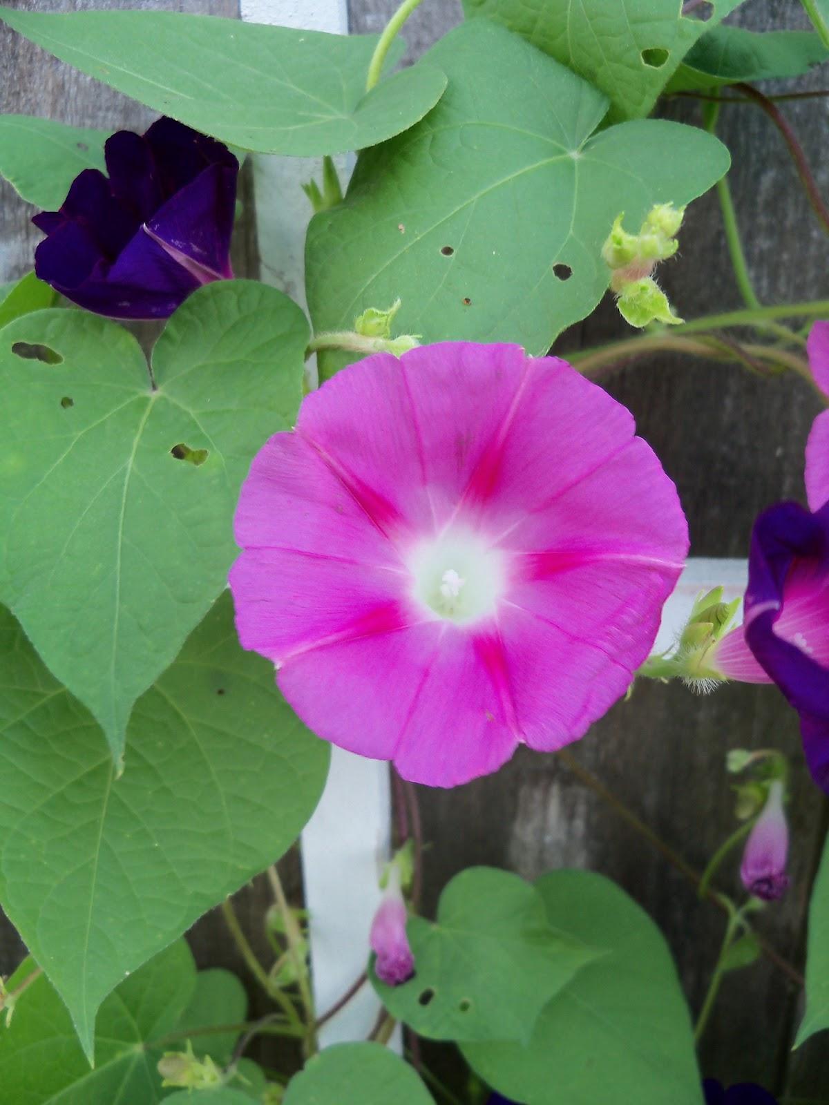 Gardening 2011 - 100_8121.JPG