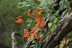 Der er en utrolig frodighed og mange flotte blomster i bjergene ...