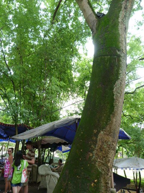 CHINE.SICHUAN.PING LE à 2 heures de Chengdu. Ravissant .Vallée des bambous - P1070544.JPG
